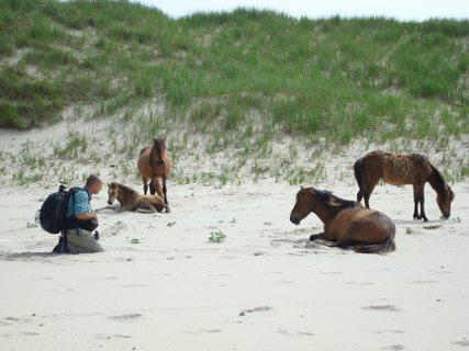 动物与自然电影周展映电影:《追逐野马》