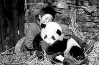 温情《熊猫回家路》PK搞笑《功夫熊猫》(组图)