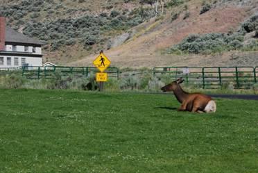 告示牌提醒踢足球的朋友们别在鹿的地盘玩