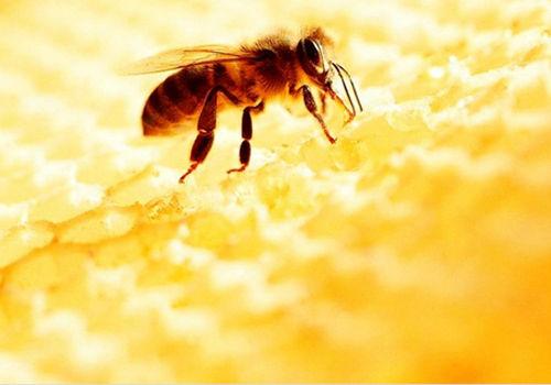 3种人忌吃蜂蜜 当心补药变毒药