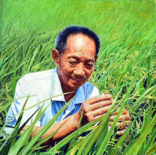 在田野中研究杂交水稻的袁隆平