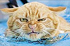 爆笑可爱的游泳猫
