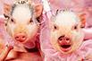 小猪拍周星驰广告