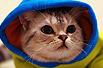 胖猫的秋冬时装秀