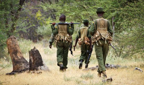 肯尼亚11头大象被杀