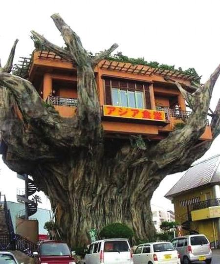 电梯隐藏在树干内直达顶端的树顶餐厅.