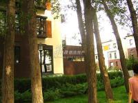 福提岛(翡翠城五期) 实景图 园林树木