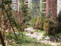 橡树湾(华润上地项目) 实景图 小区绿化