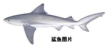 """作品:黄野之""""蓝鲨""""战斗机"""
