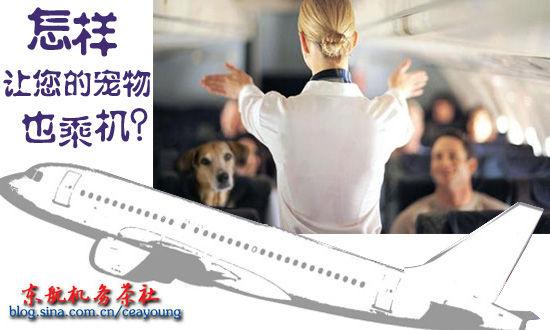 带宠物乘机注意事项