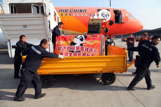 """工作人员护送大熊猫""""蜀祥""""离开"""