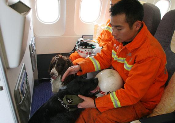 三支搜救犬享受国航航班头等舱