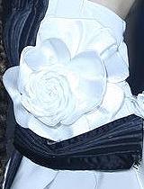 立体的白茶花