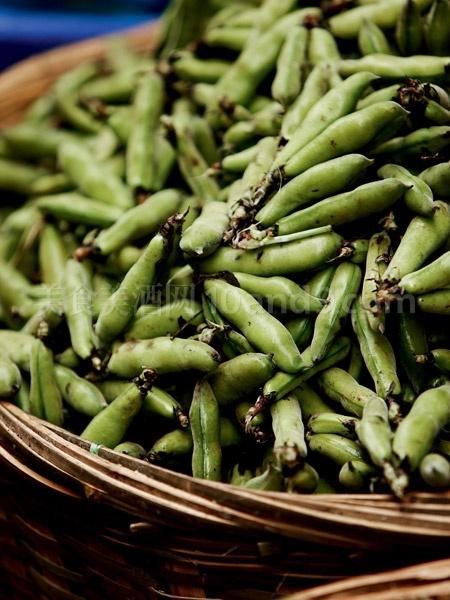 蚕豆动物造型
