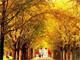 09赏秋进行时