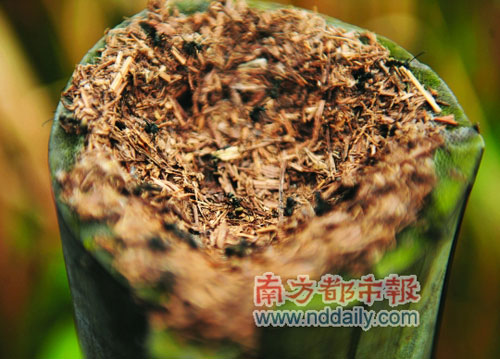 蚁窝,蚂蚁在一根1米高的柱子上安家,它们也要应对潮起潮落。高频彩宿水