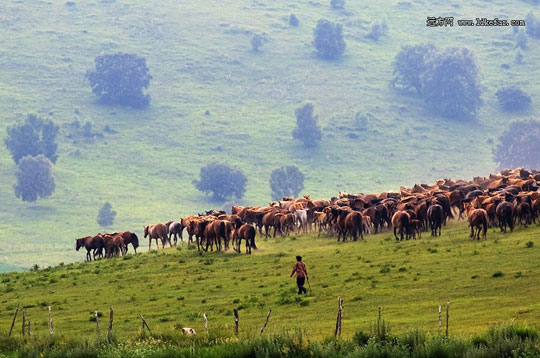 草原牧马 图:无限循环