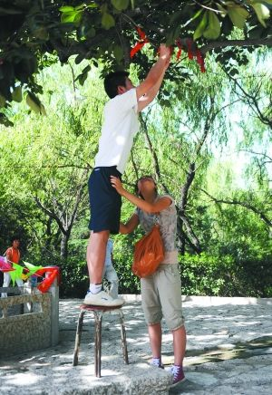 情侣们在七夕时,在夫妻树上结绳求姻缘