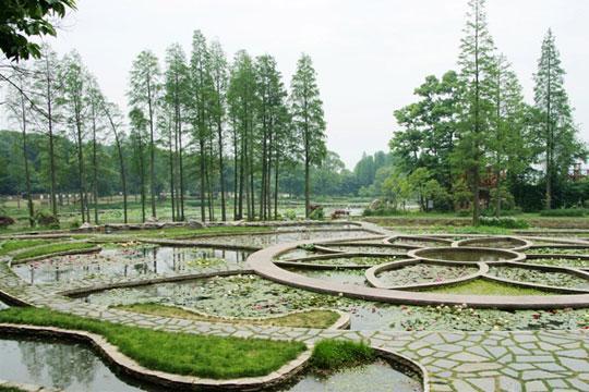 武汉植物园(图:酷一点儿)