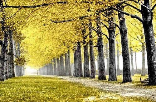 北京的初秋