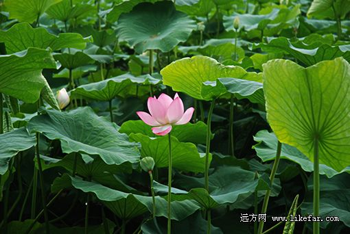 (游湖码头 摄影:王咩咩)