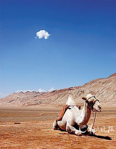 火焰山旁的骆驼