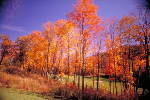安大略秋季美丽的枫叶林.