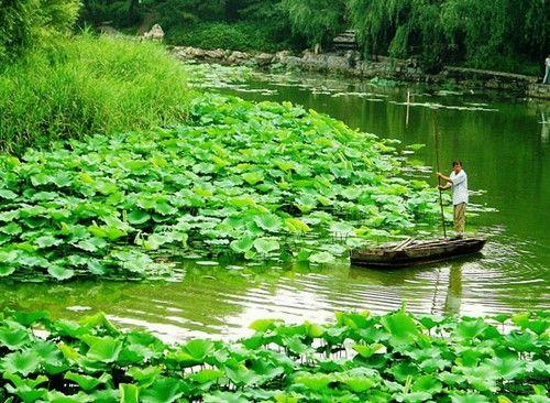 紫竹院荷花池