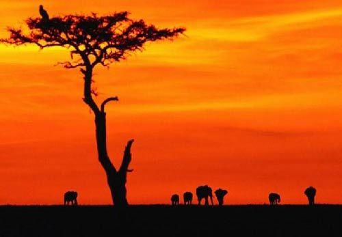 天堂肯尼亚