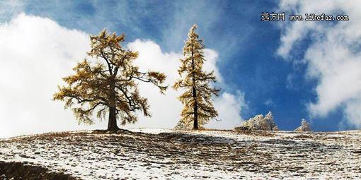 初冬薄雪 摄影:小鲍鱼