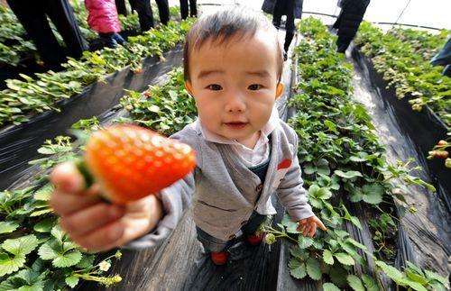第四届香山草莓文化旅游节