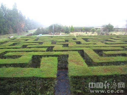 绿篱植物cad平面图