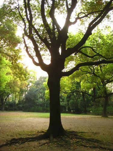 复兴岛公园