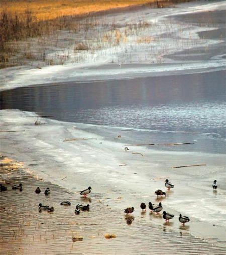 国内 湿地 观鸟 指南