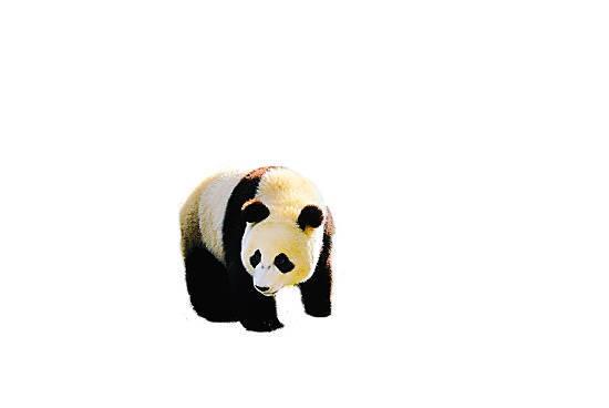 卧龙自然保护区熊猫
