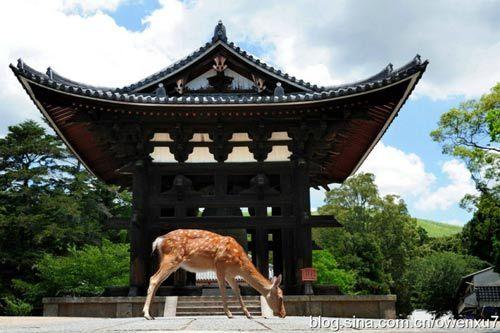 奈良的鹿随处可见