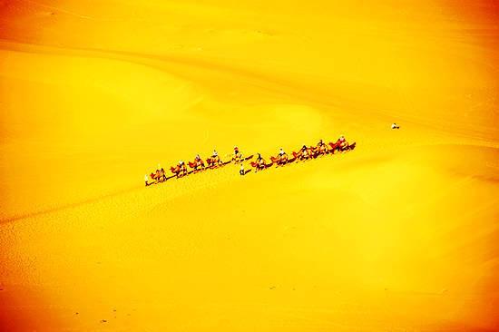 一个游人掉队了,两行骆驼前面跑