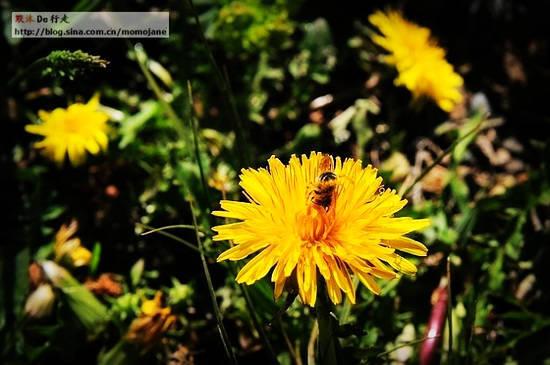 漫山遍野的花儿