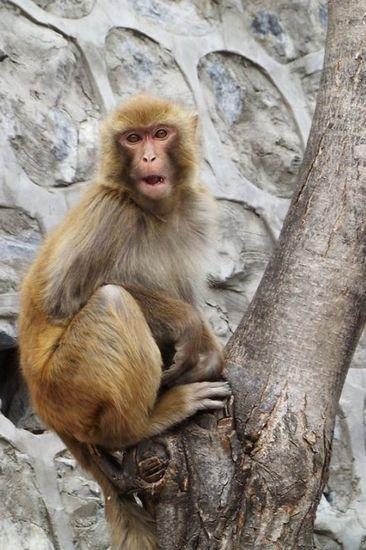 新浪旅游配图:北京房山上方山的猕猴 来源:彦睿的新浪博客