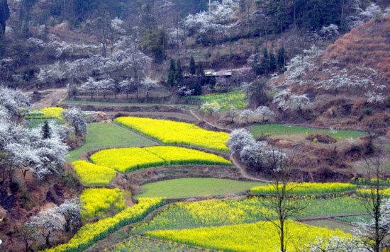 新浪旅游配图:音寨美景 摄影:flora