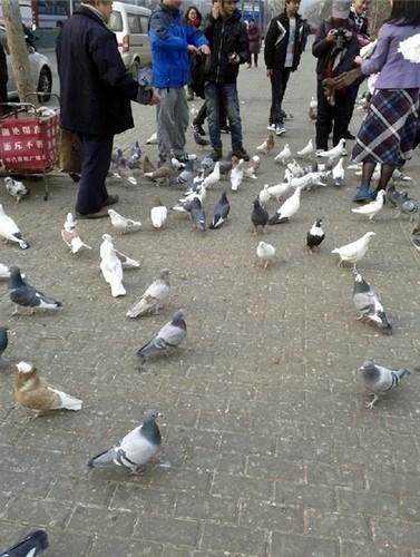 当代商城喂鸽子(图片:@Joanna_von )