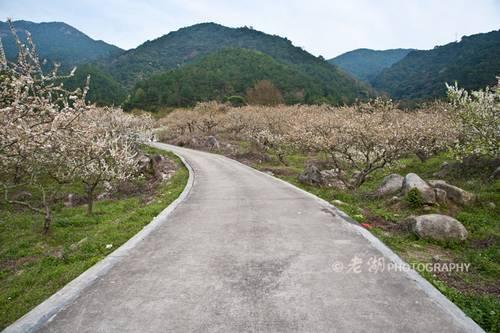 广东梁化国家森林公园赏花全攻略(3)