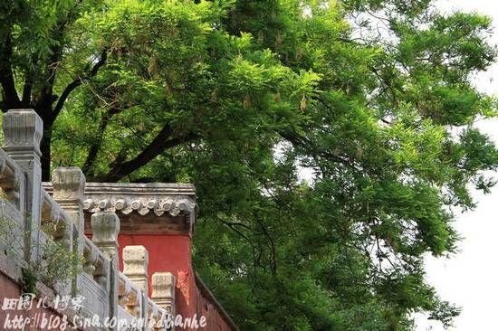 戒台寺植被茂盛、色彩丰富,是拍摄取景的绝佳之地