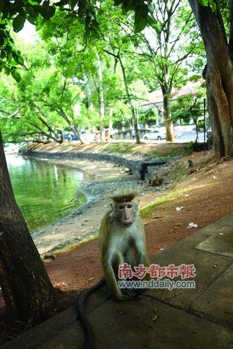 寺庙里的猴子