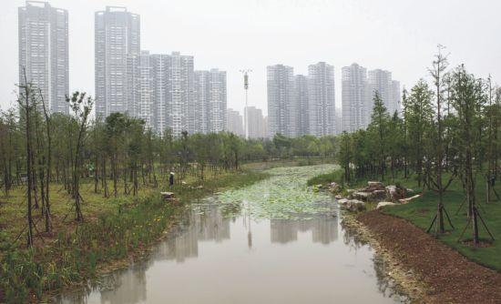 武汉沙湖公园风雅犹存 她是根植城市的梦图片