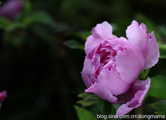 花中的惊鸿一瞥 图片来源:阿龙妈妈 新浪博客