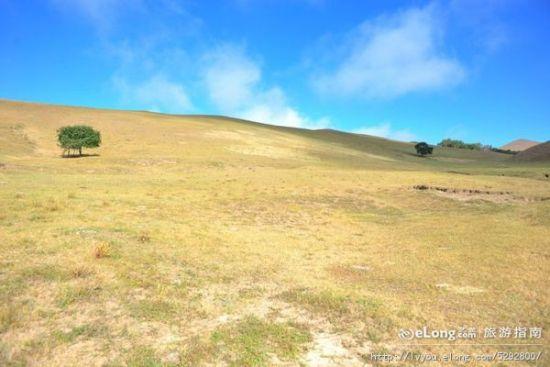 在草原仰望蓝天白云