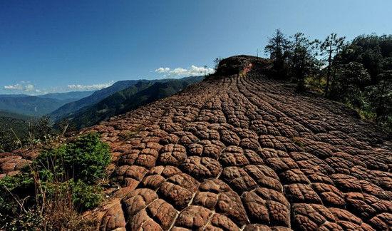 壮观的千龟爬行(图:POCO网 达楞勒 拍摄)