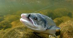 三文鱼的滋味 北挪威海鲜之旅