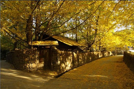 古银杏生态旅游村